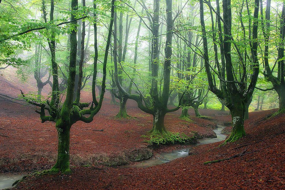 fairy-forest_FONAMAD